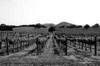 Welcome to the Alexander Valley